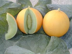 MelonAmarillo